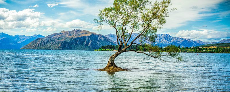 Lone tree standing up from water