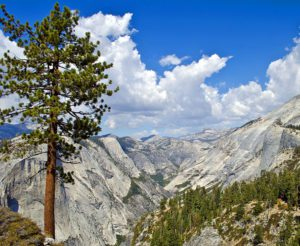 tree and mountains in sierras