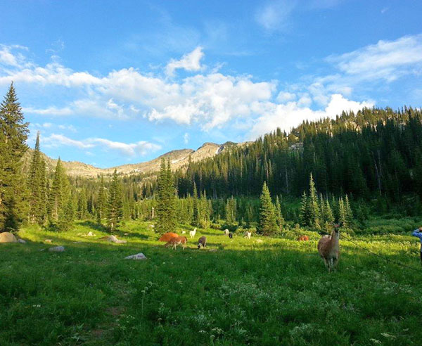 Tetons backpacking trips