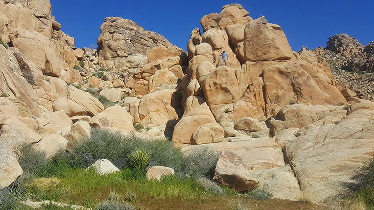 Joshua Tree Backpacking Tour