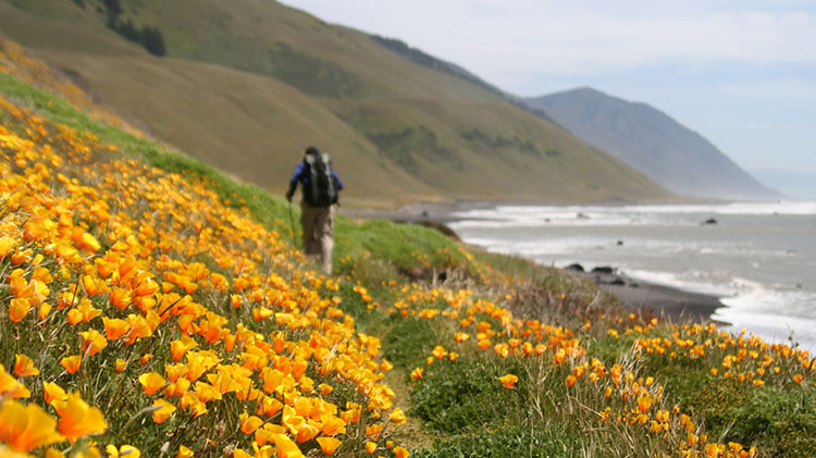 Lost Coast Backpacking Trip