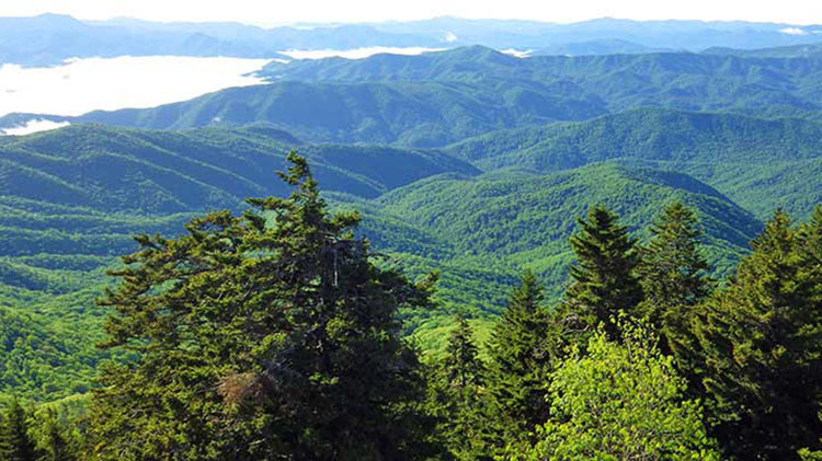 Mount LeConte Hiking Tour