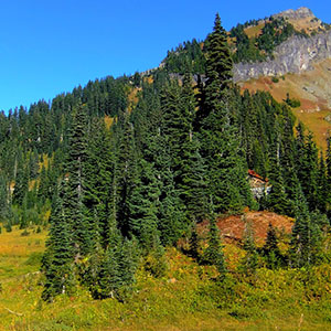 Mountain Views in Olympic National Park